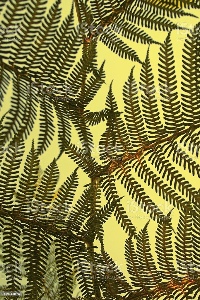 Détail de forêt lumineux photo libre de droits