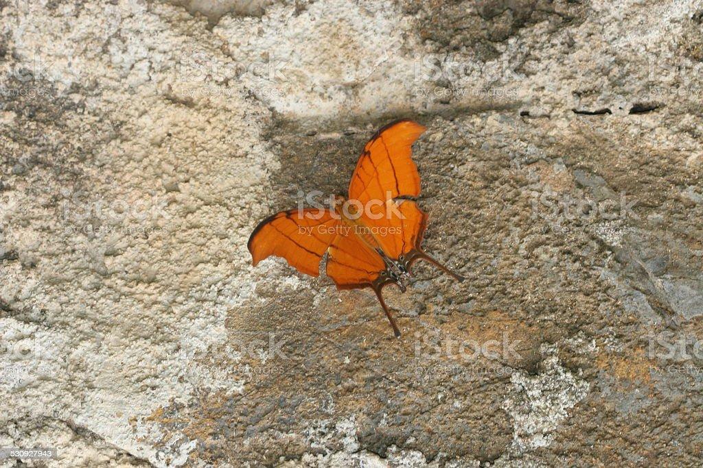 Luminous orange butterfly stock photo