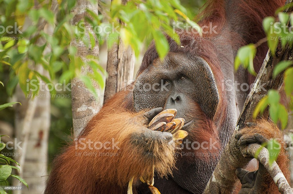 Lunch time! stock photo