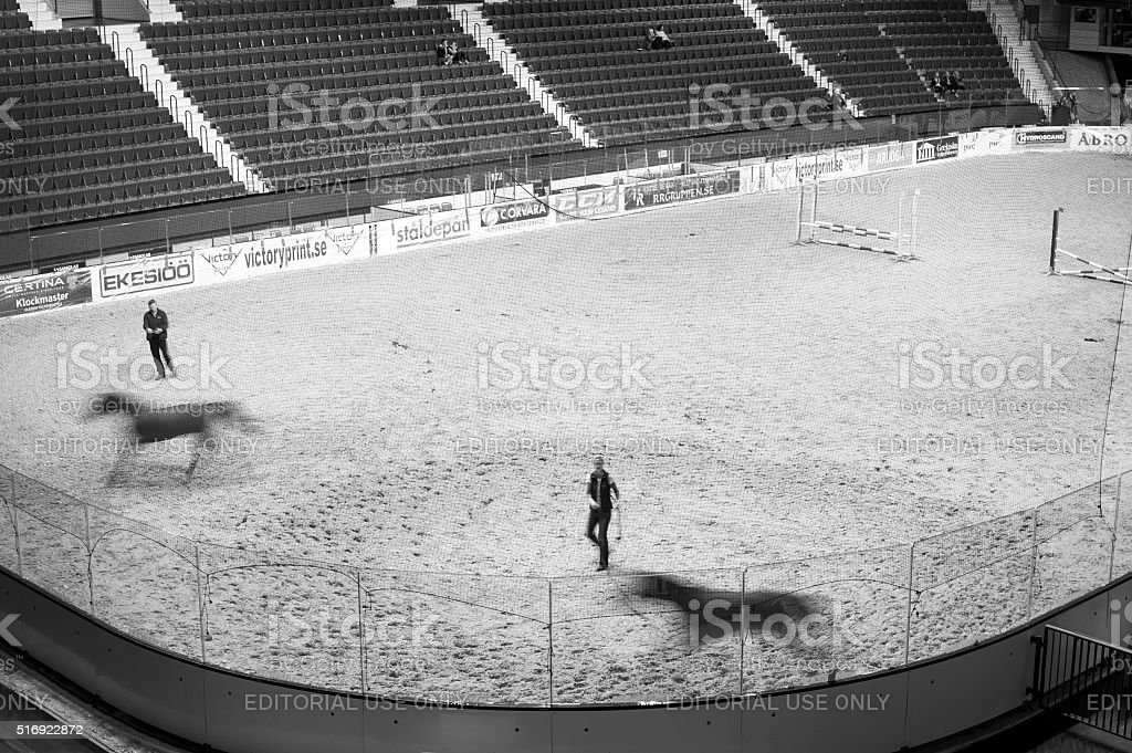 Lunging horses back stage at horse event on hockey rink stock photo