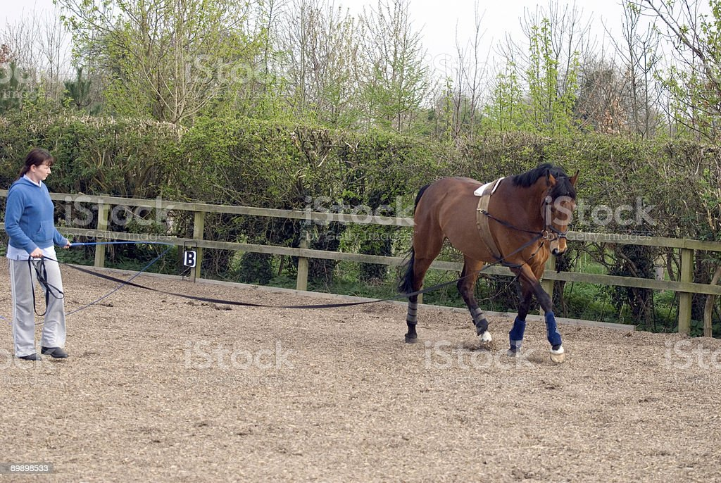 Lunging in the school stock photo