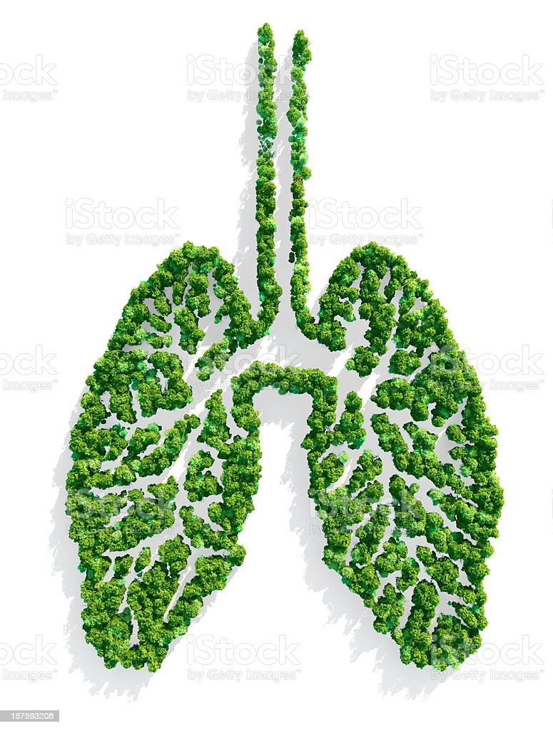 Lungs of the Planet royalty-free stock photo