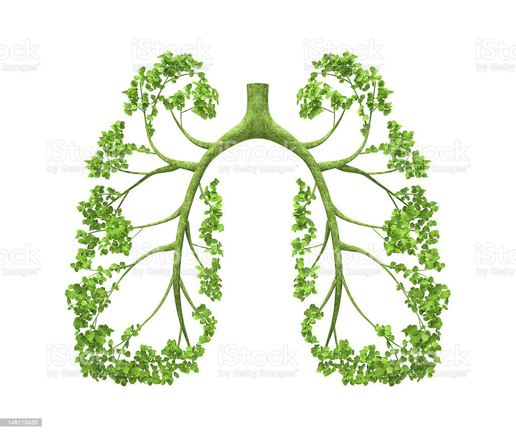 Lungs - tree stock photo