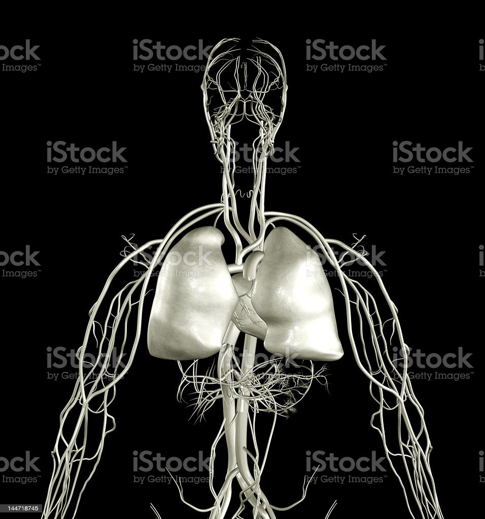 Lungs X-ray royalty-free stock photo