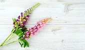 lupine over white wooden background