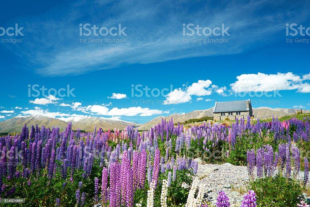 Lupins And The Church At Lake Tekapo stock photo