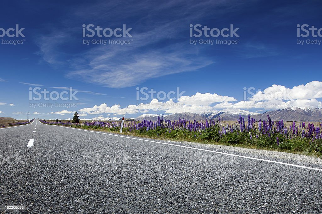 Lupins by a Country Road, Central Otago, New Zealand royalty-free stock photo
