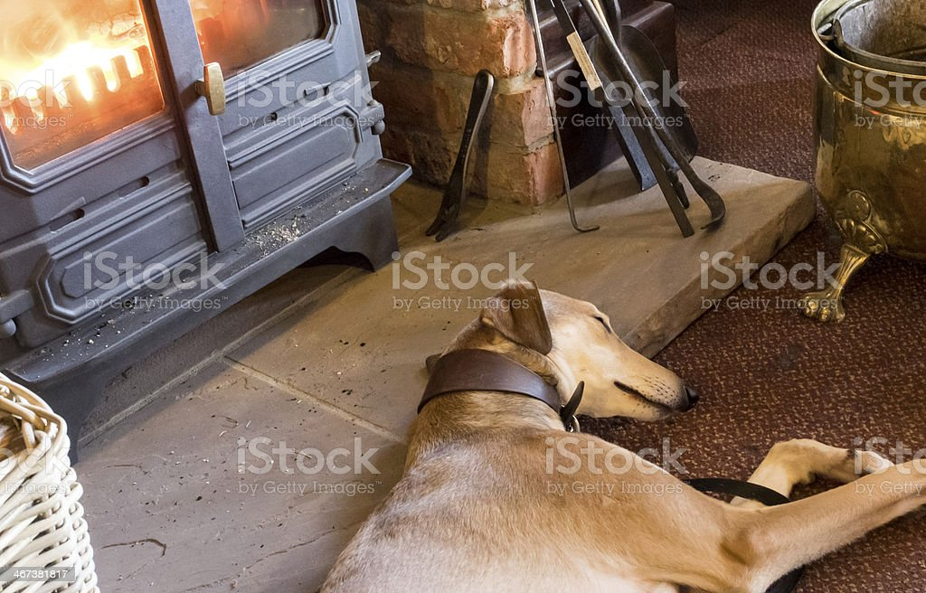 Lurcher  by the fire stock photo