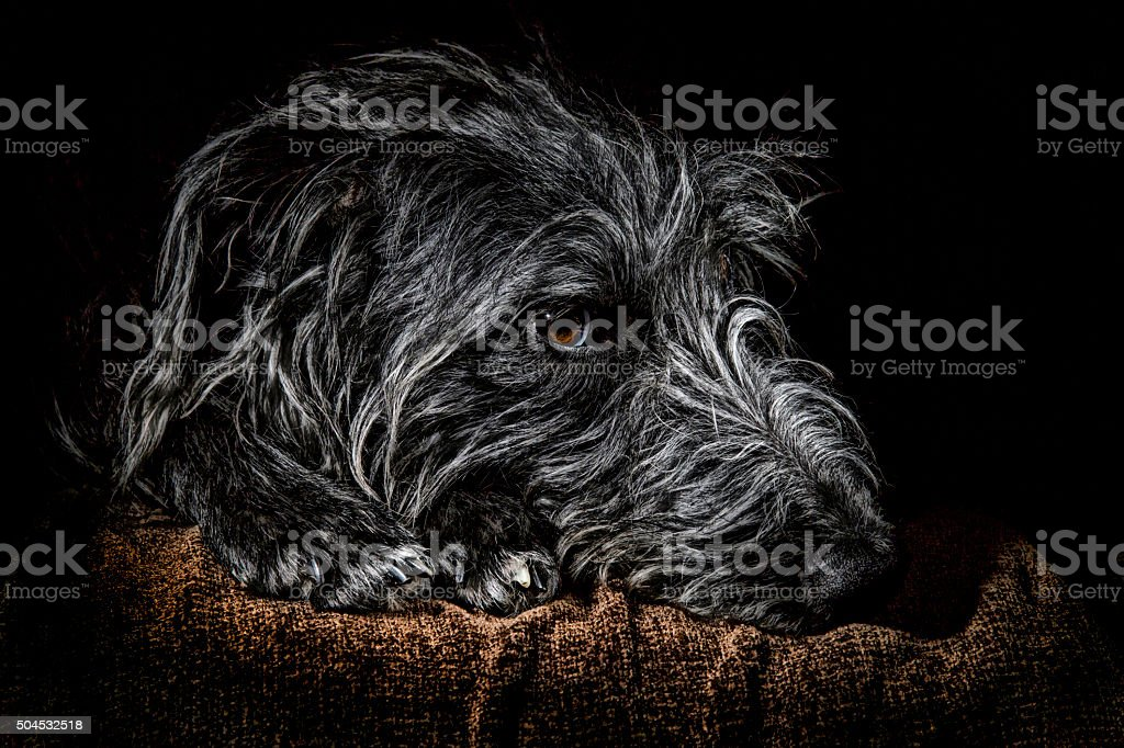 Lurcher's Head stock photo