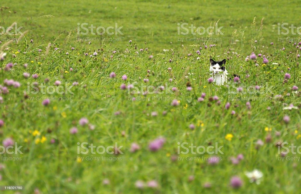 Betreffen können Katze auf der Sommer-Wiese Lizenzfreies stock-foto