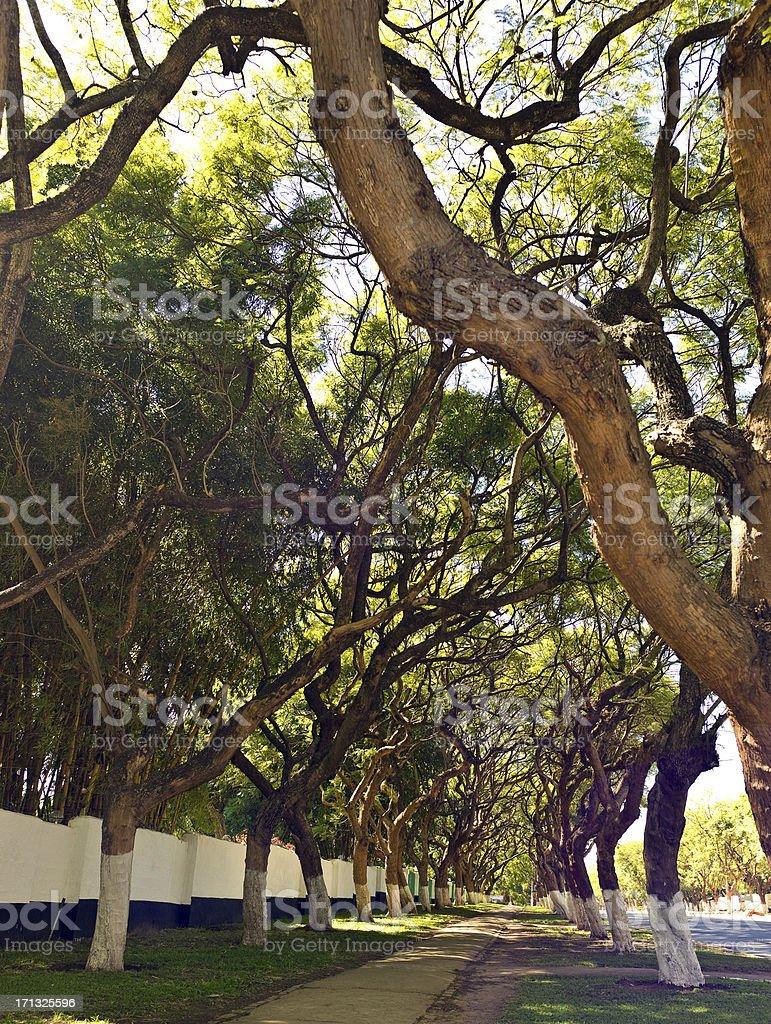 Lusaka great avenue royalty-free stock photo