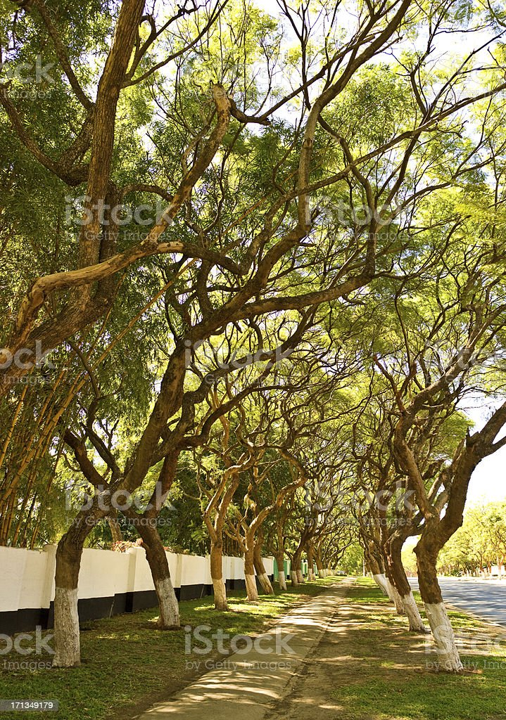 Lusaka great avenue stock photo