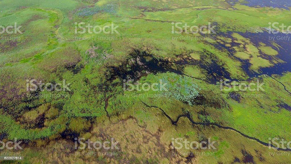 Luscious green wetlands stock photo