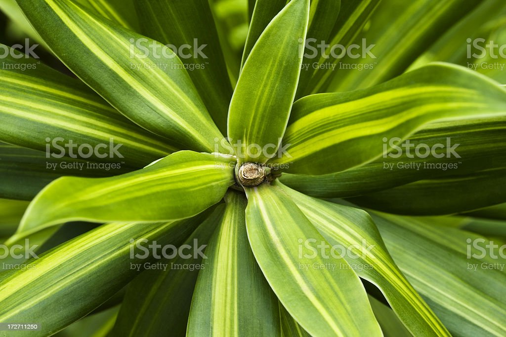 Luscious tropical fern macro royalty-free stock photo