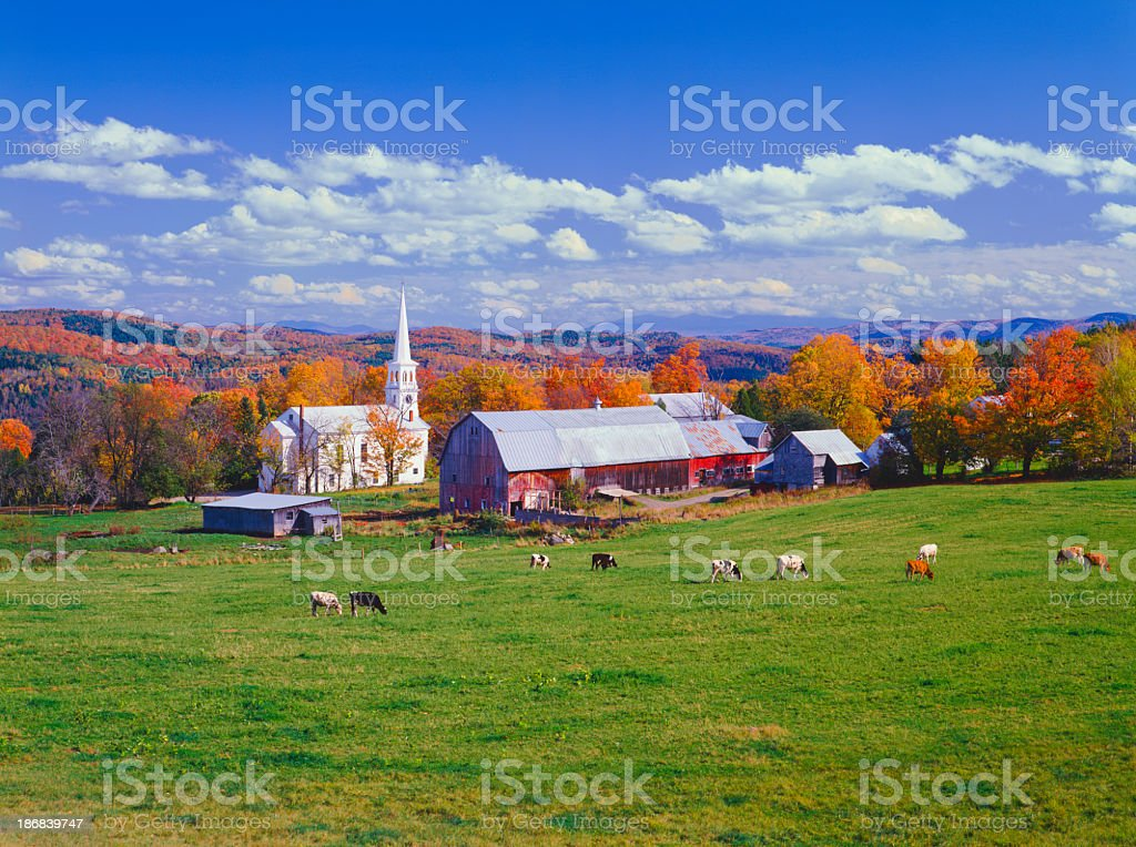 Lush autumn countryside in Vermont with grazing cows stock photo