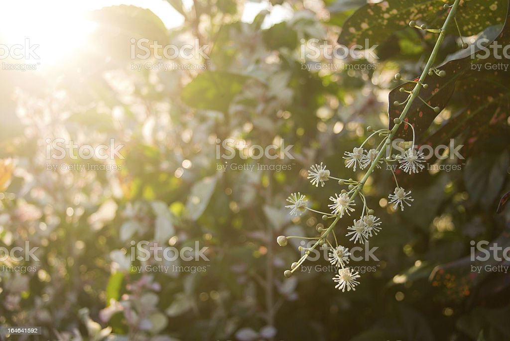 lush bright floral background at sunset royalty-free stock photo