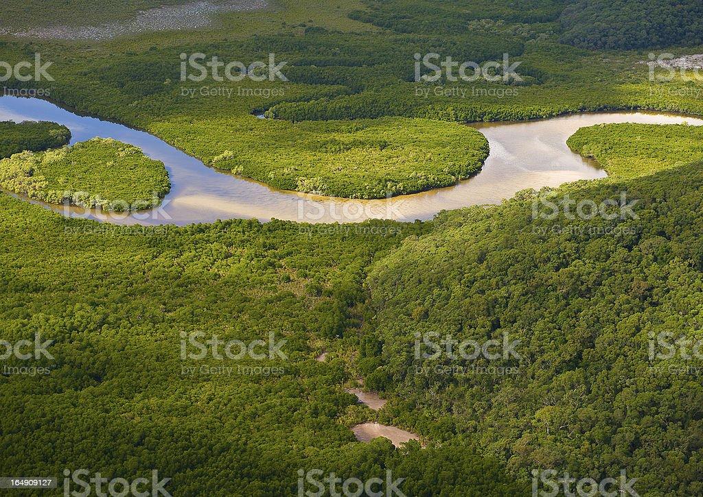 Lush Coastal Wetlands royalty-free stock photo