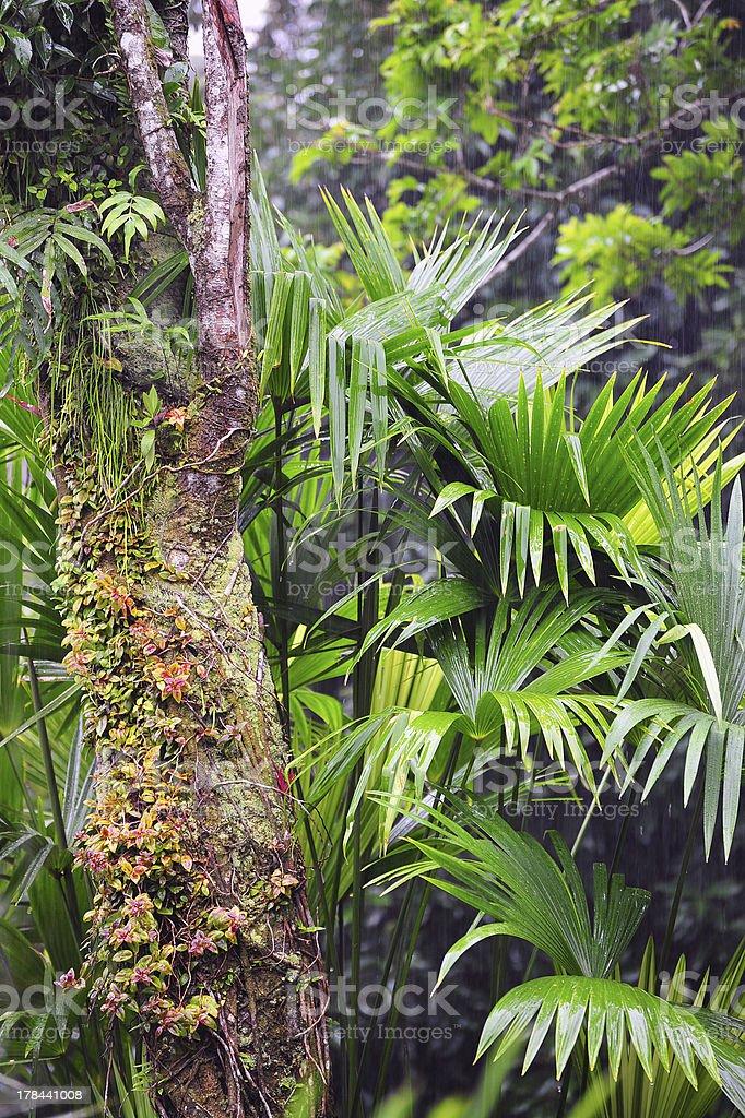 Lush Costa Rican foliage royalty-free stock photo