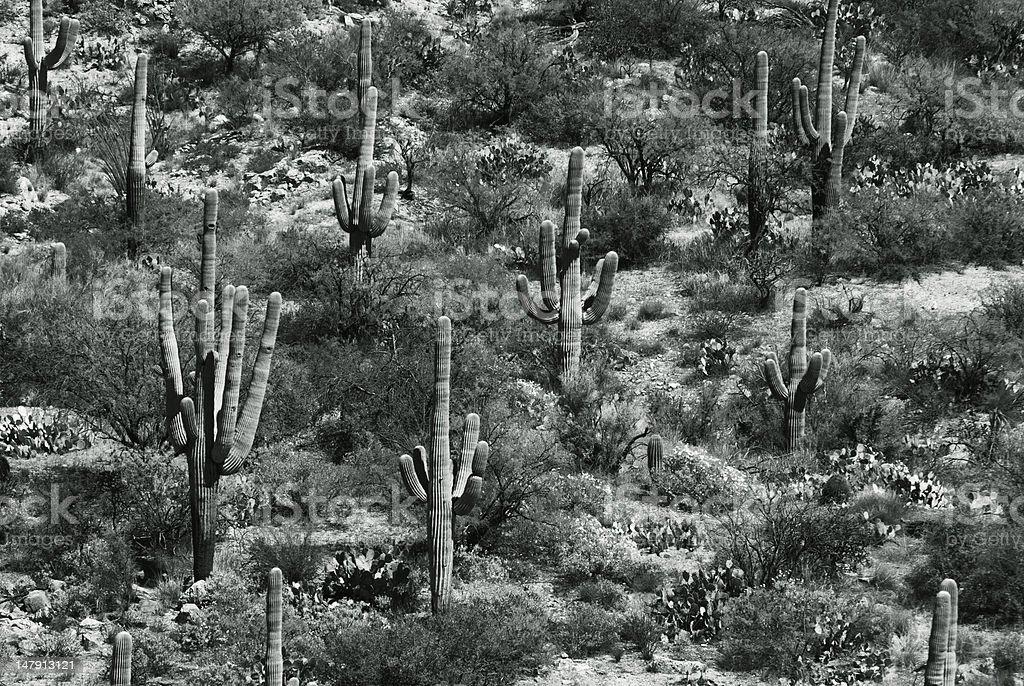 Lush Desert stock photo