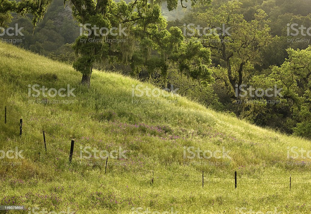 Lush field and wildflowers on dewy morning royalty-free stock photo