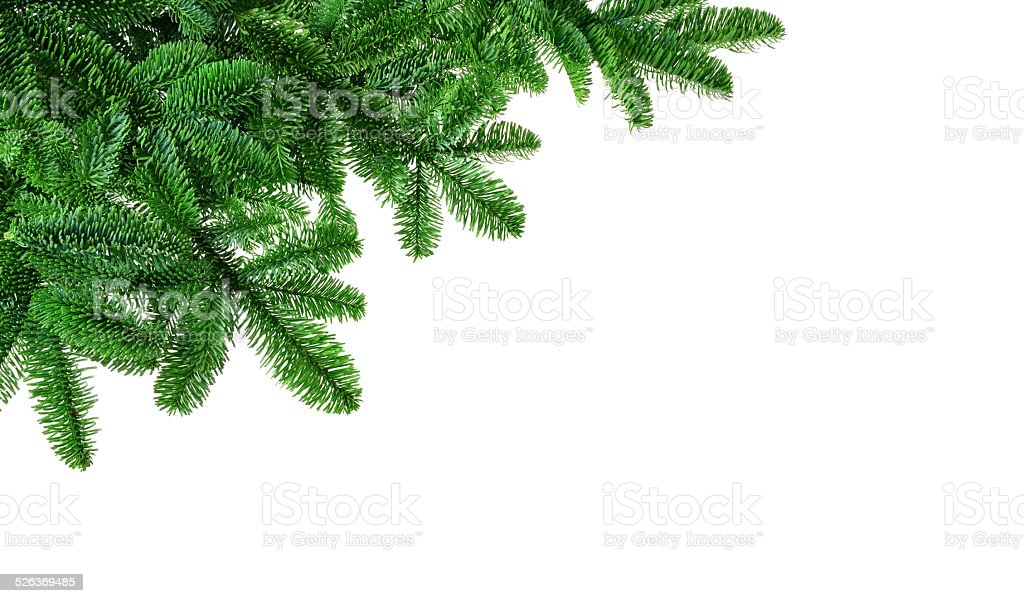 Lush fir twigs on white stock photo