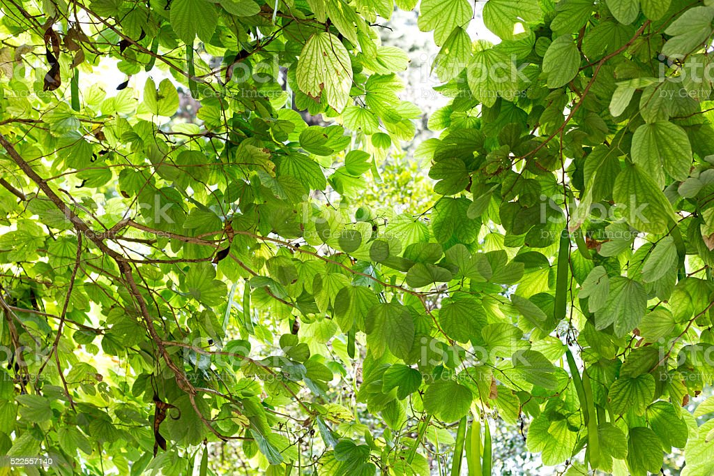 Lush Foliage Background stock photo