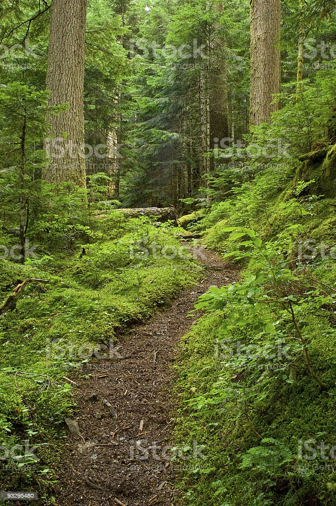 Lush forest path stock photo
