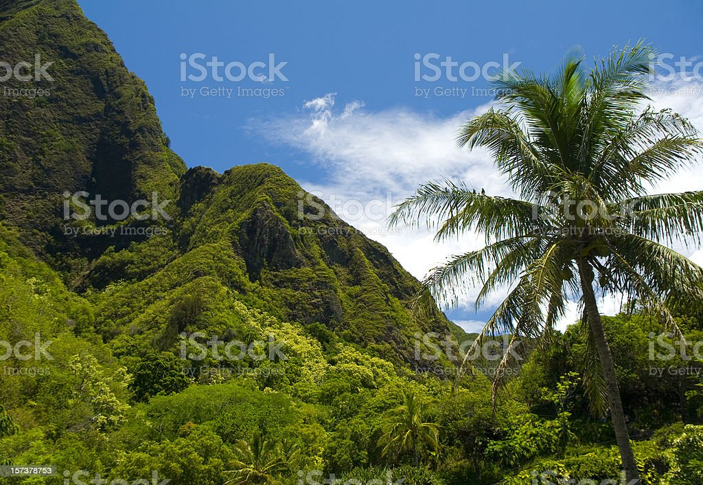 Lush forest royalty-free stock photo