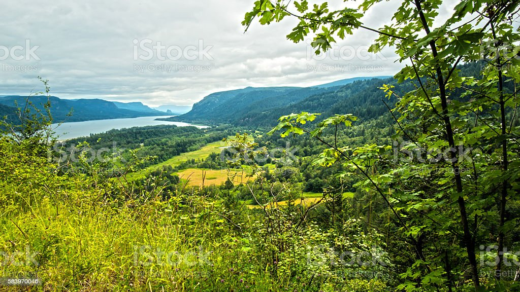 Lush Forest River Valley, Panoramic Landscape Wide Angle Scenics stock photo