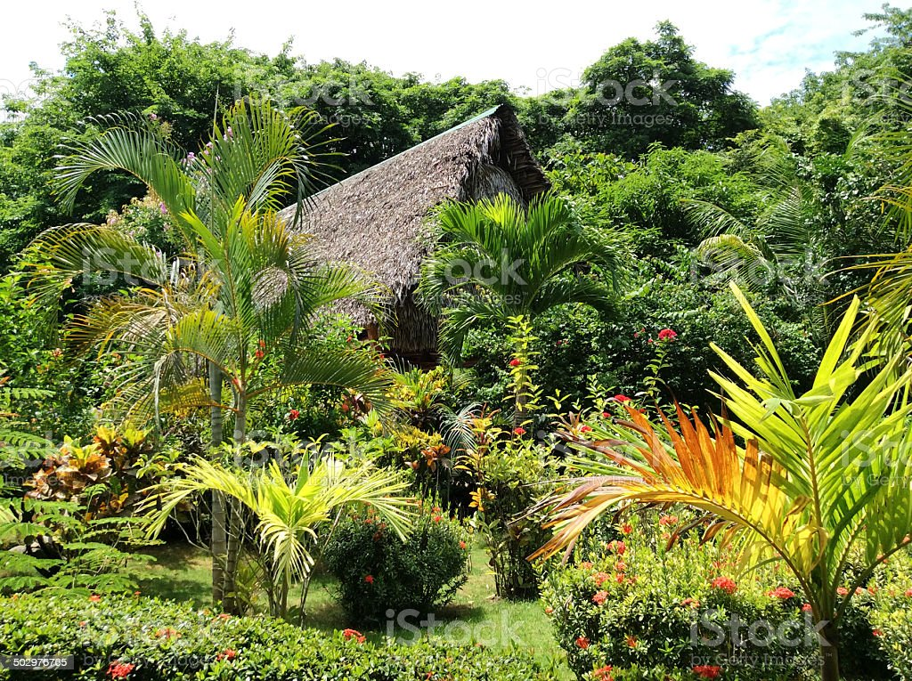lush garden stock photo