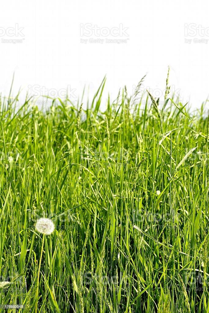 lush grass royalty-free stock photo