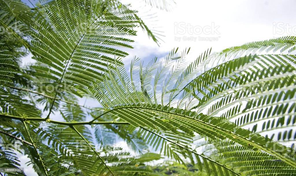 lush green foliage and sky royalty-free stock photo