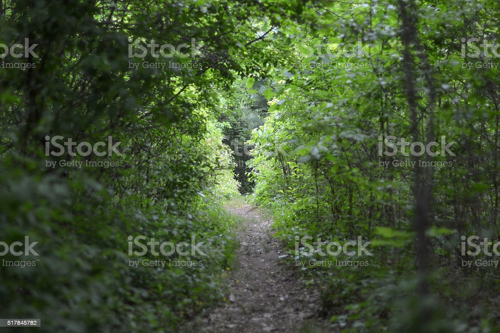 lush green foliage with nature path and sunlight stock photo