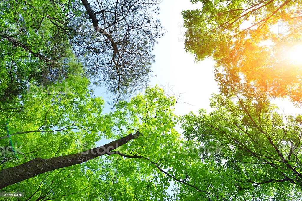 Lush Green Forest in the Sunlight stock photo