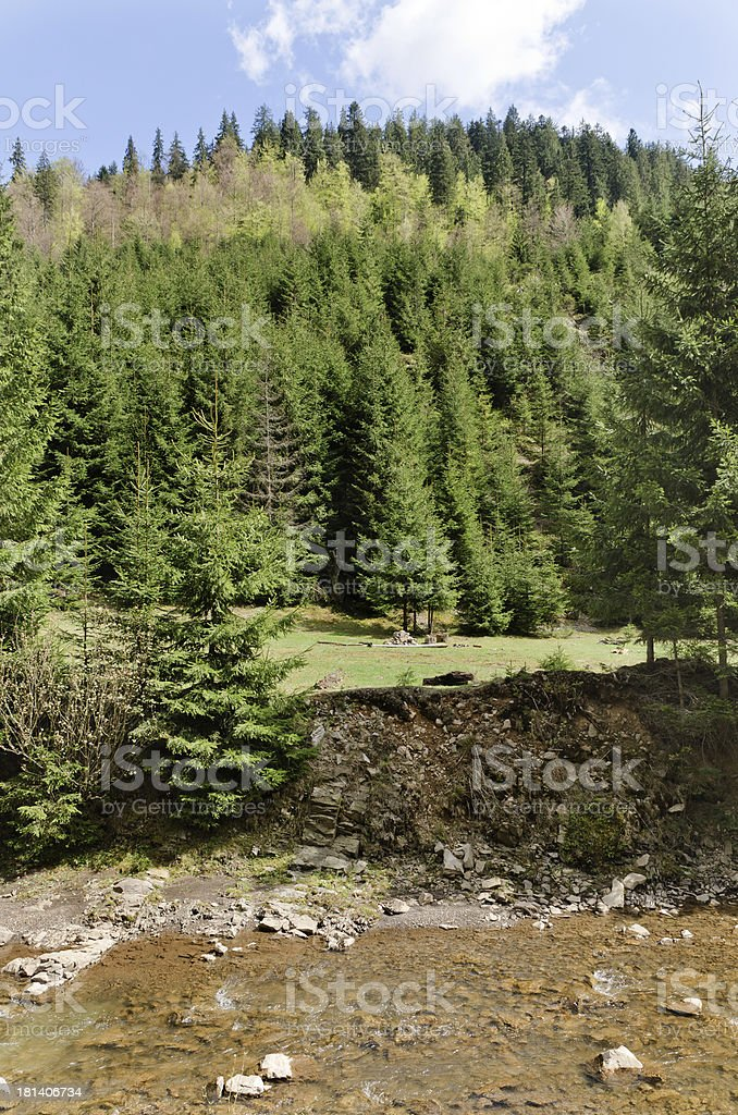 Lush green forest near a pure water creek royalty-free stock photo