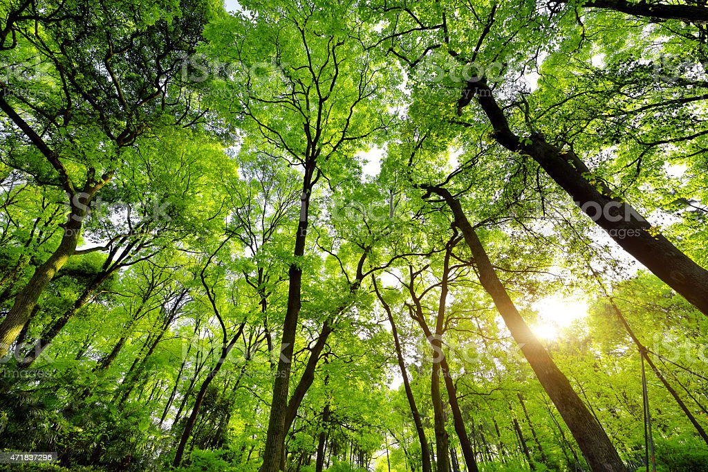 Lush Green Forest stock photo