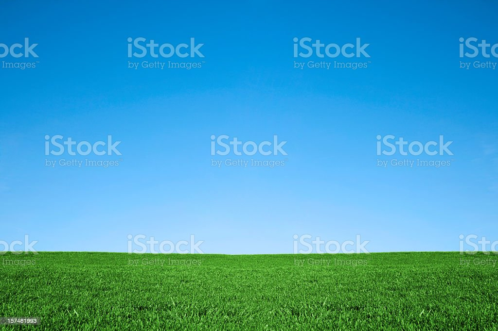 Lush green grass and cool blue sky background stock photo