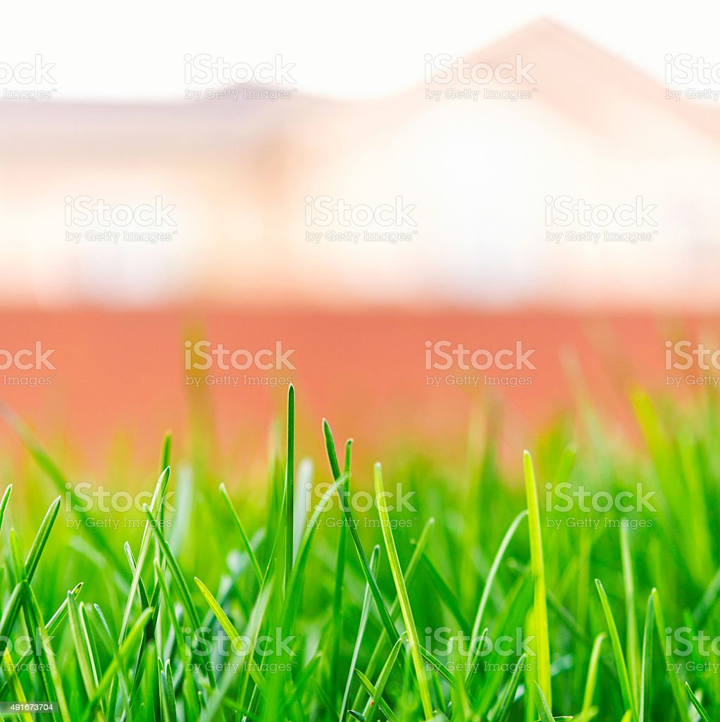 Lush green grass growing in sunlight with house in background stock photo