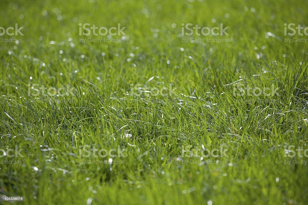緑豊かな芝生 ロイヤリティフリーストックフォト