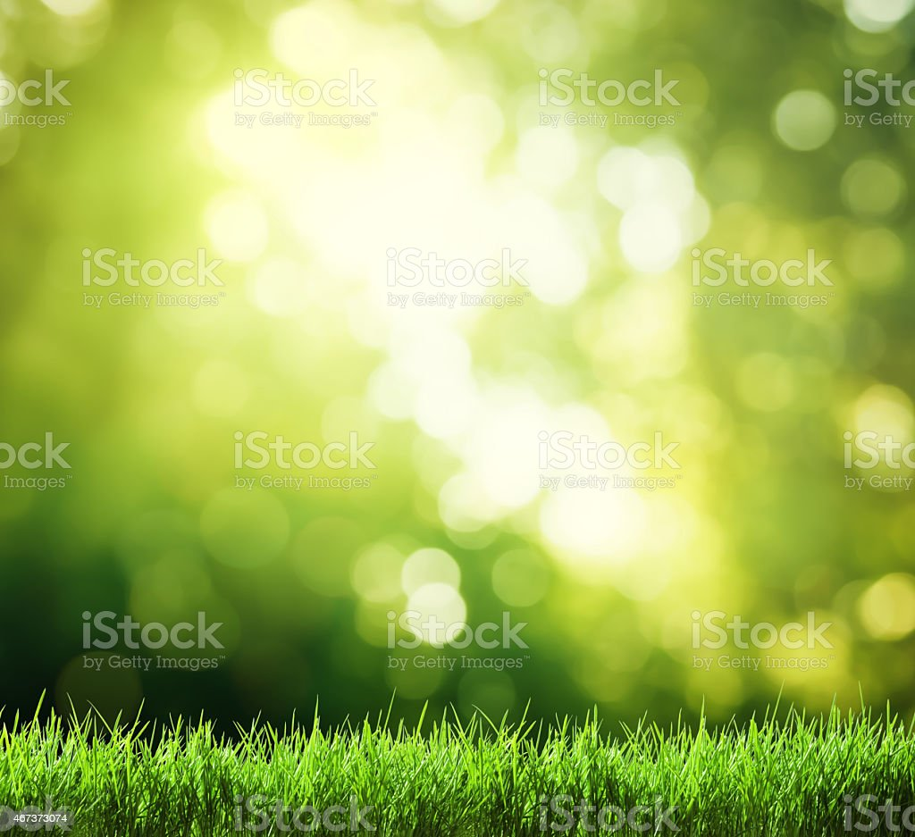 Lush green grass with a green bokeh background stock photo