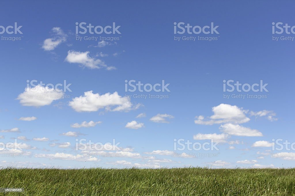 Lush green grass with blue skies and billowy clouds stock photo