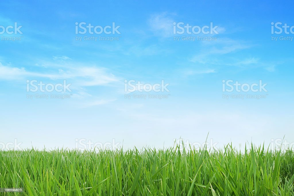 Lush green grass with blue sky background stock photo