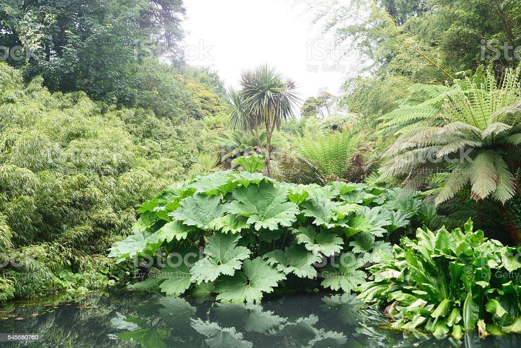 Lush green jungle like plants with pond stock photo