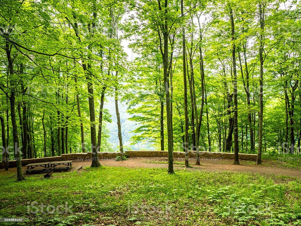 Lush Green Landscape stock photo