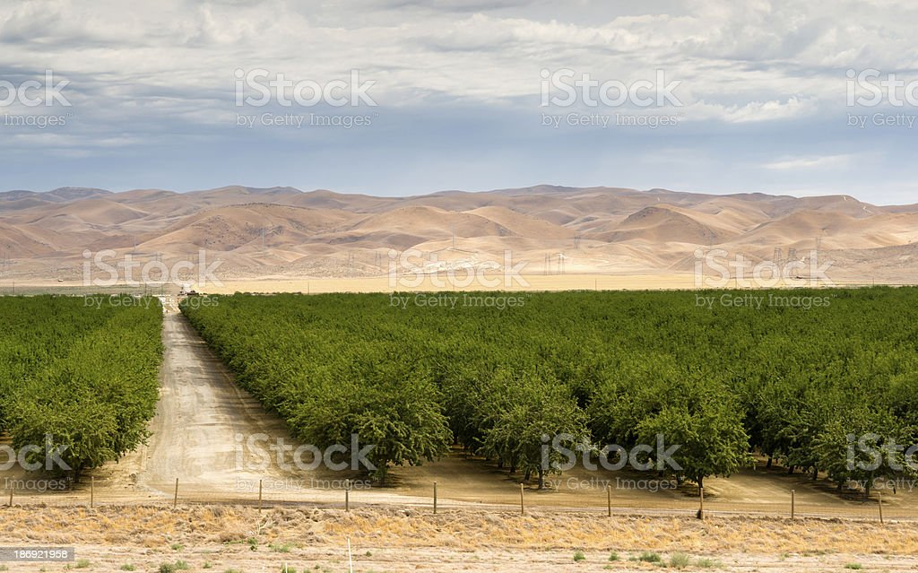 Lush Green Orchard Farm Land Agriculture Field California United stock photo