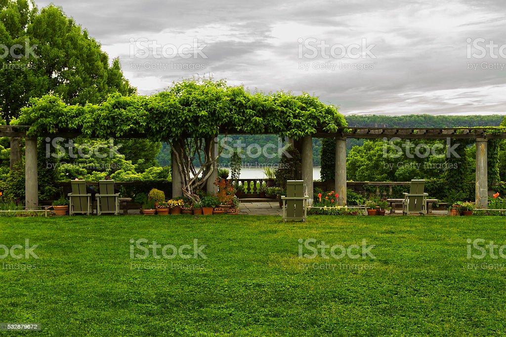 lush green stock photo