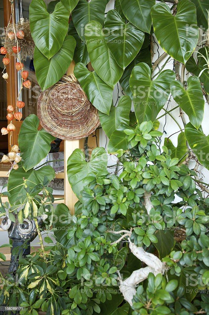 lush green plants in a winter garden stock photo