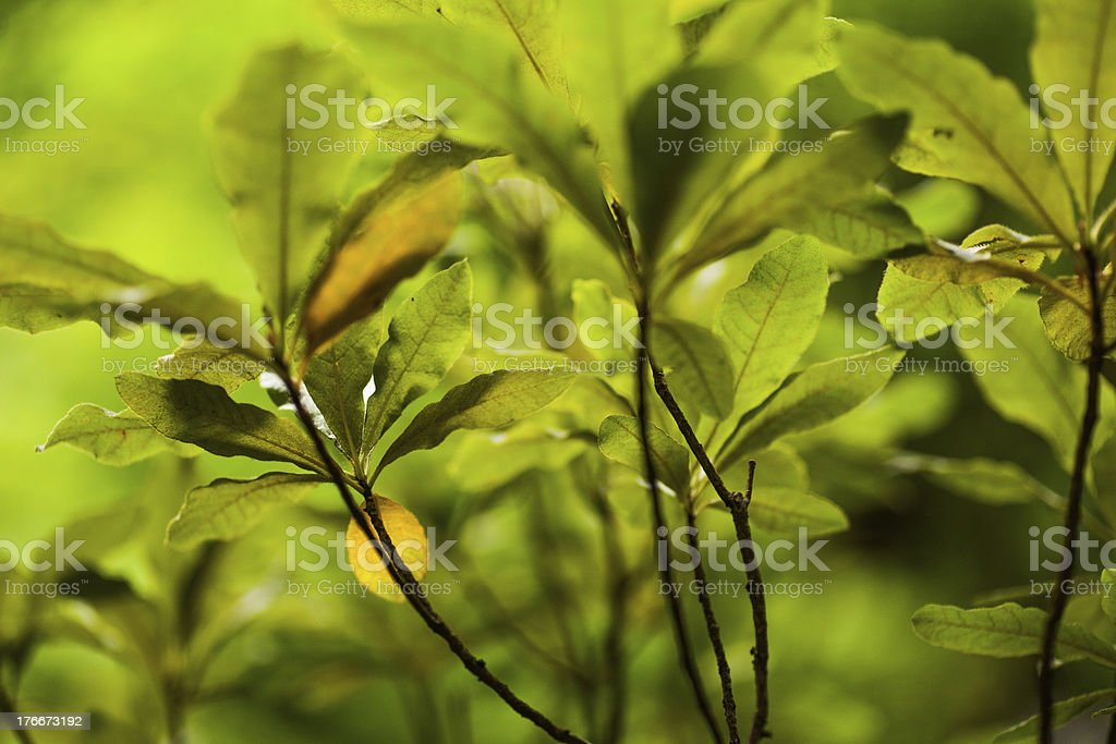 Lush green plants royalty-free stock photo