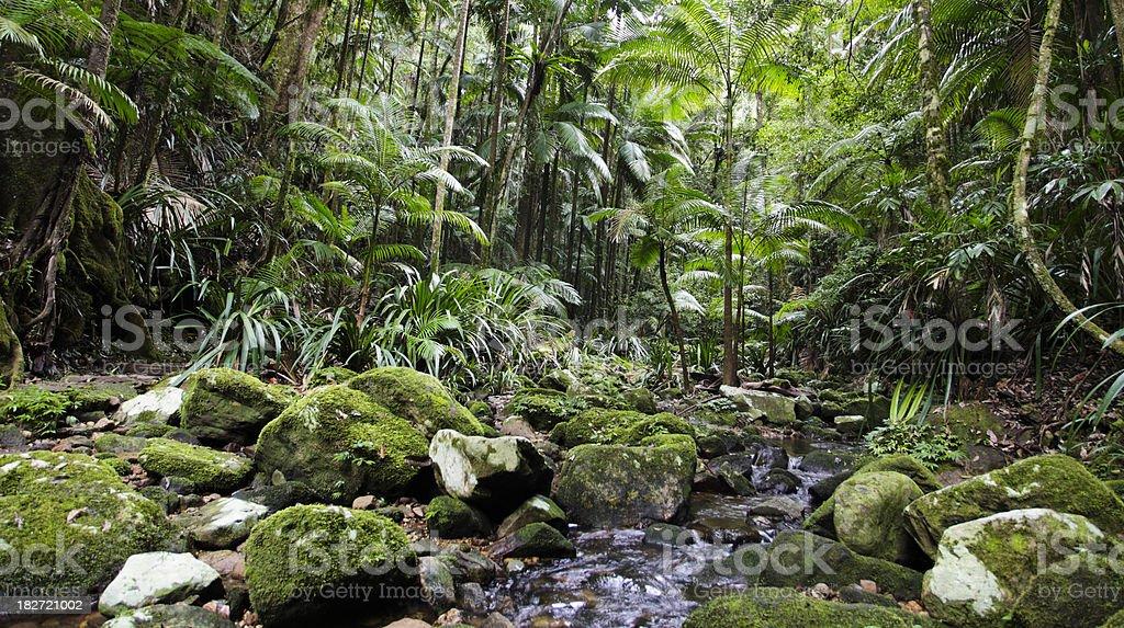Lush Green Rainforest stock photo