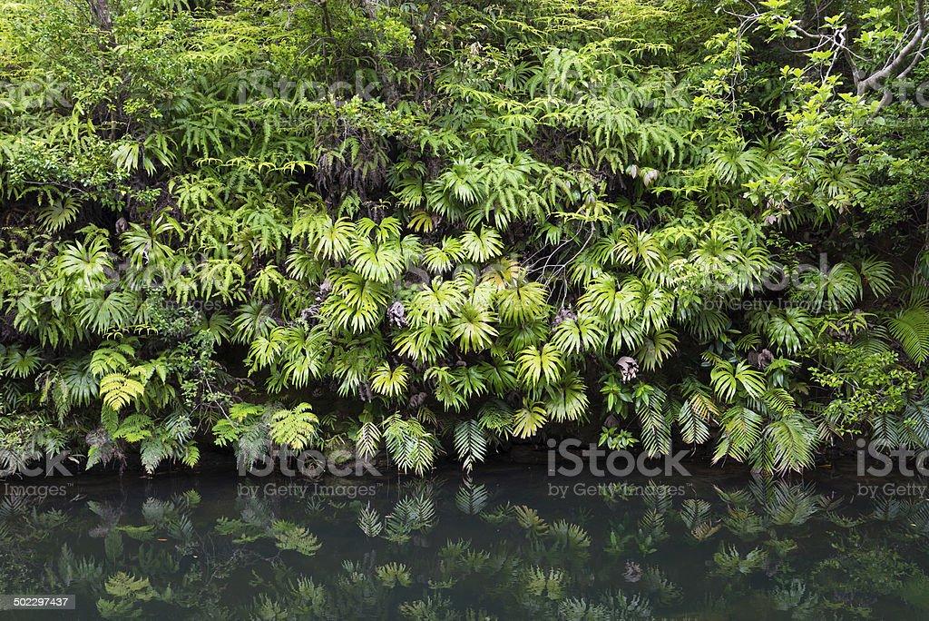 Üppig grünen Regenwald vegetation spiegeln in Dschungel-pool Lizenzfreies stock-foto